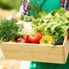 食物繊維でやせる!おいしい野菜宅配サービスのおすすめ3選